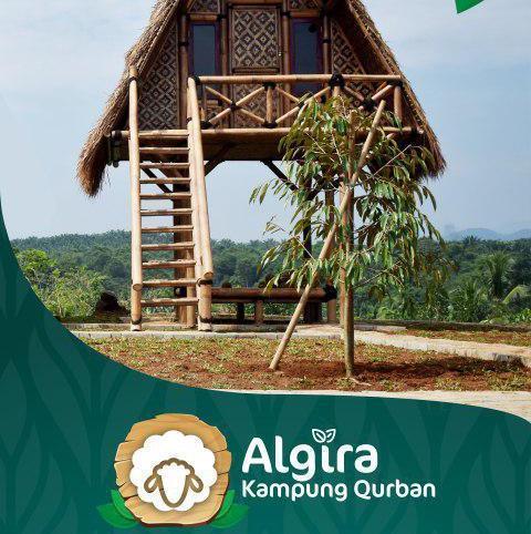 Algira Kampung Qurban