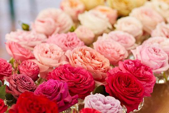 kavling produktif bukit mawar